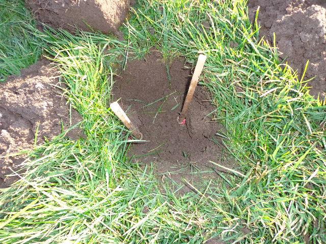 De mollenvanger plaats zijn klemmen niet in de molshoop, maar in de rit nabij een nieuwe molshoop.