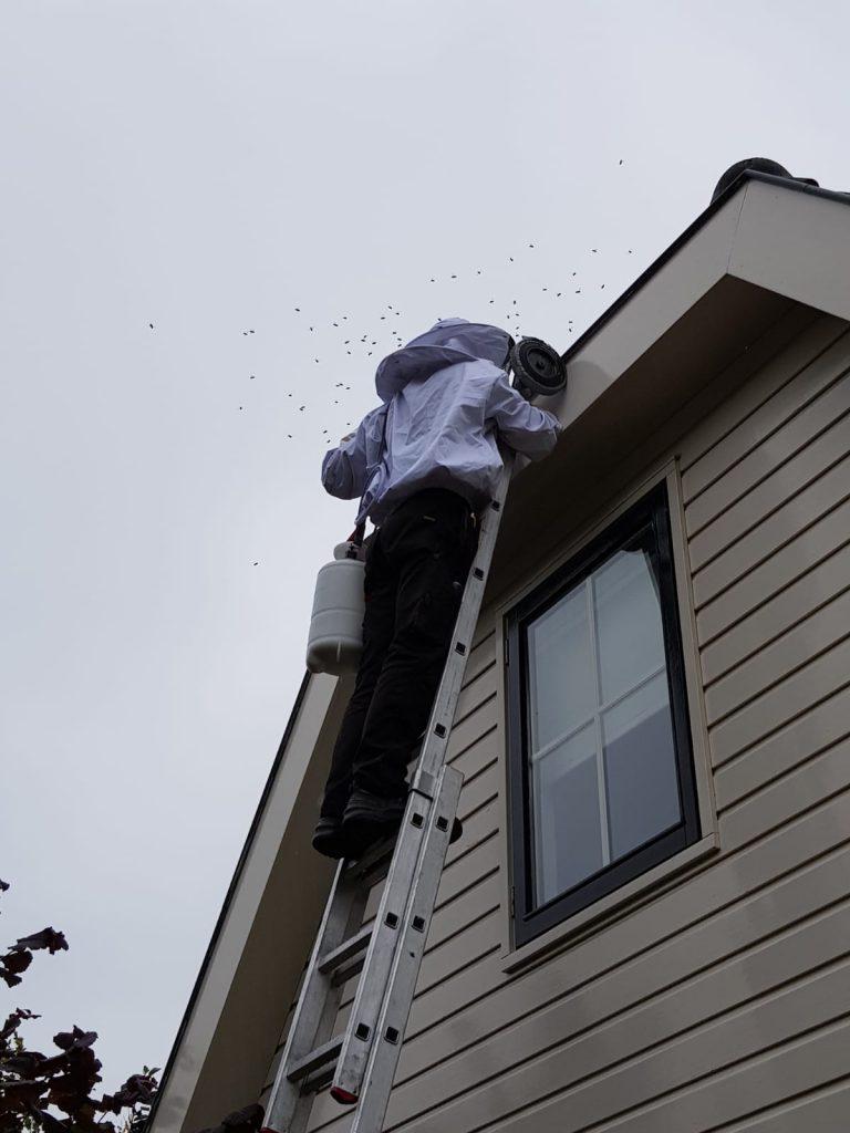 Wespenbestrijding op de ladder